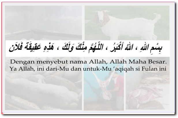 Doa akikah sesuai sunnah