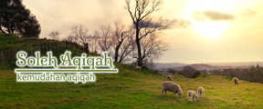 Harga kambing aqiqah 2019 Bantul yang terjangkau