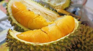 Bolehkah Ibu Hamil Makan Durian?!